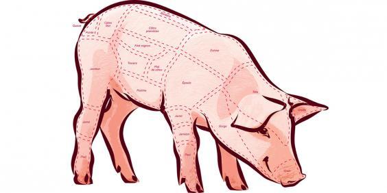Schéma de découpe d'un cochon